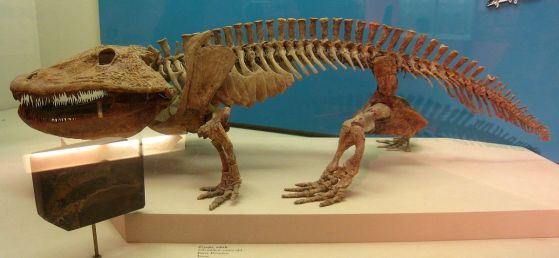 1200px-eryops_-_national_museum_of_natural_history_-_img_1974
